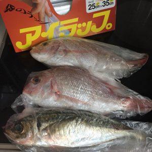 アイラップ 食品保存 食品の保存 鮮魚 精肉 ブログ